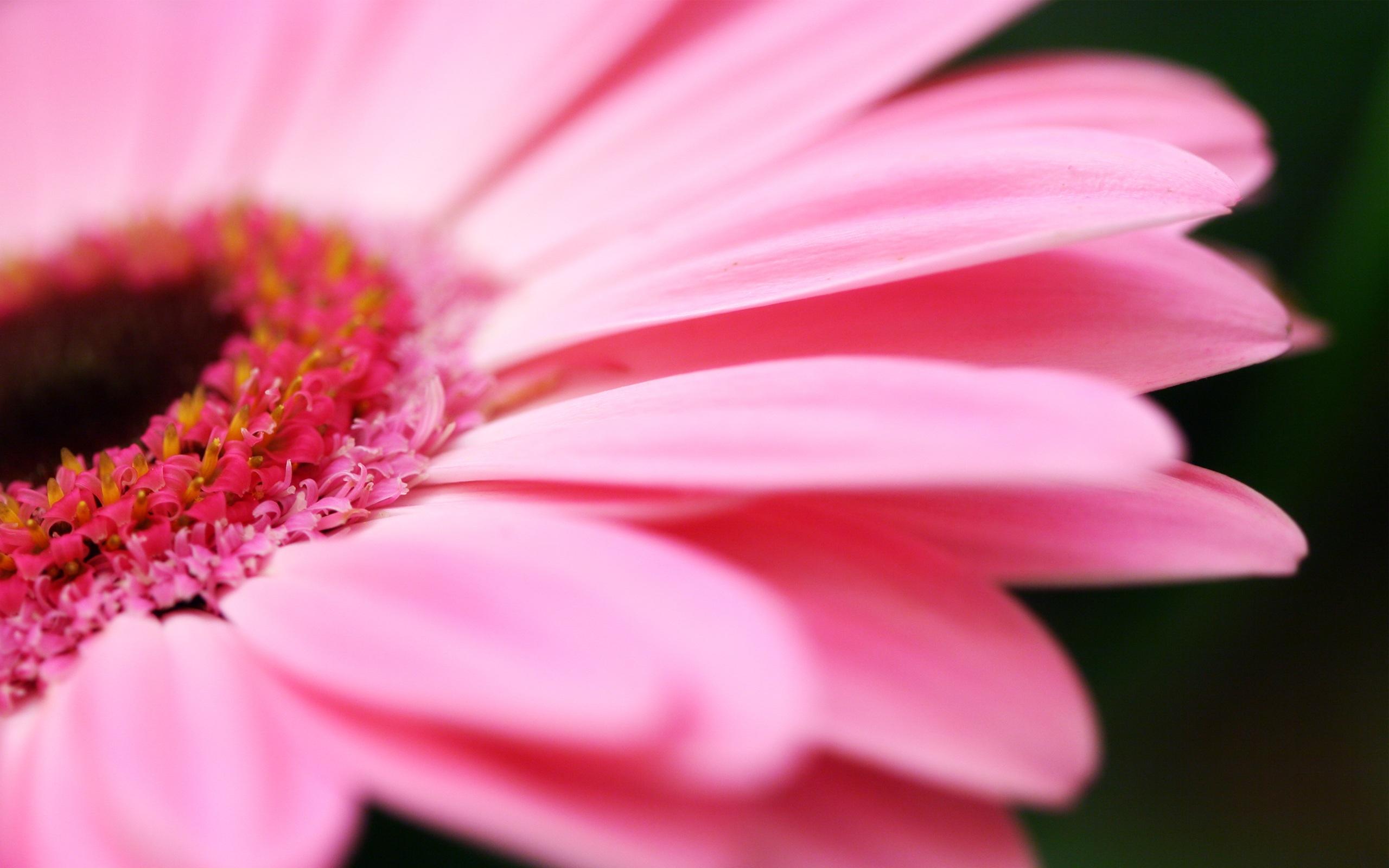 Pink-flower-macro_2560x1600