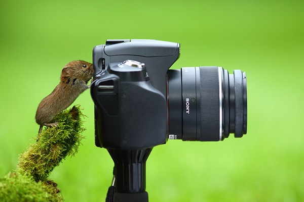 animals-with-camera-helping-photographers-3__880r